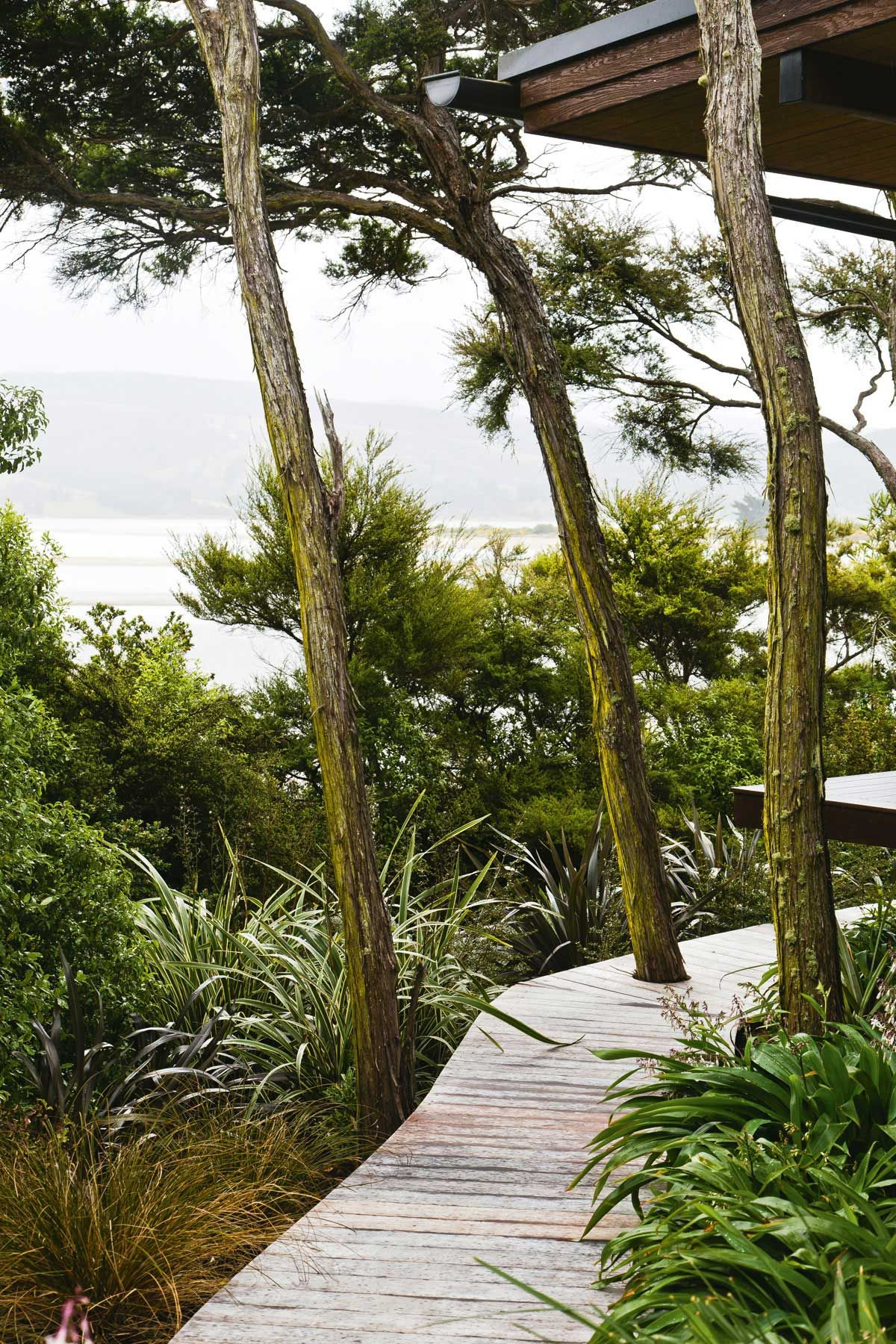 The boardwalk incorporates mature kanuka trees and is fringed with Astelia fragrans, Athropodium, Phormium 'Dark Delight' and massed plantings of Geranium 'Rozanne'