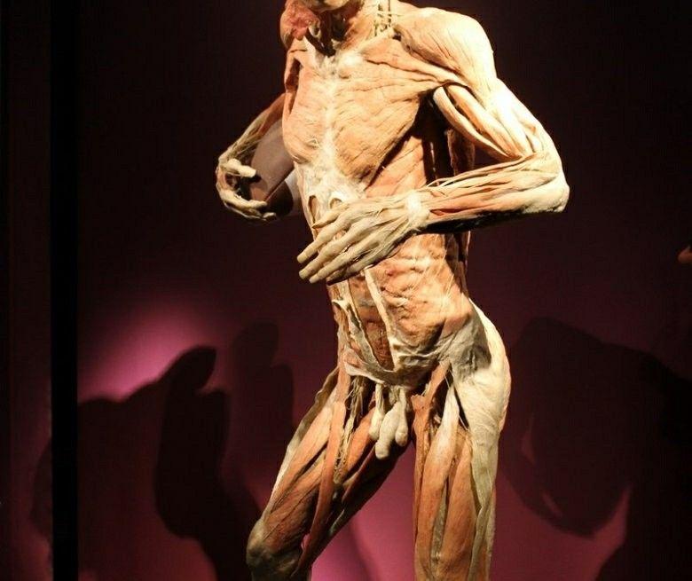 Pin On Body Worlds Dead Body Art