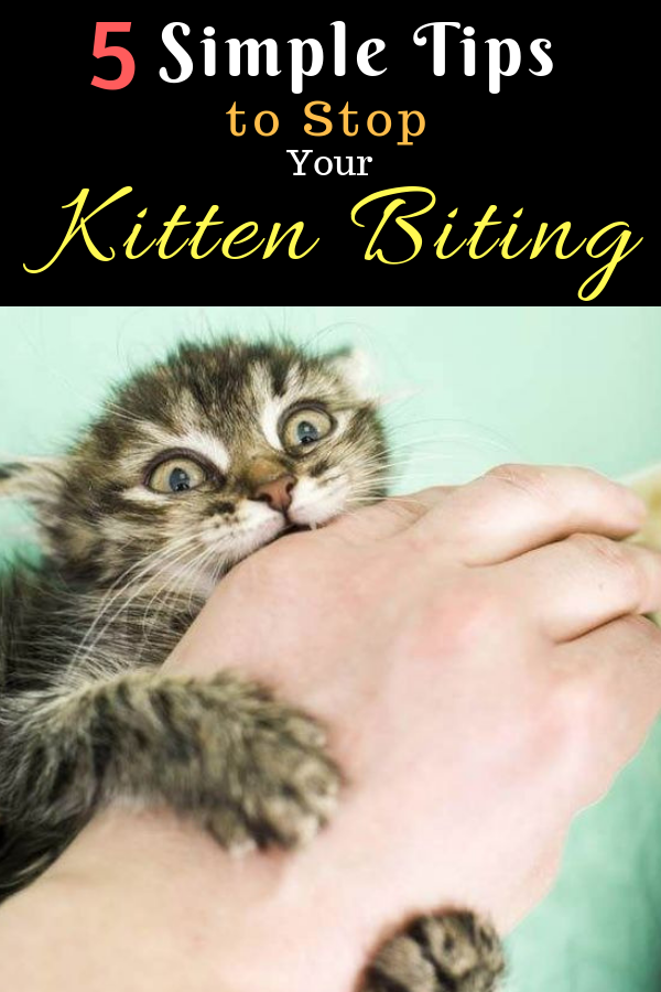 5 Simple Tips to Stop Your Kitten Biting (With images