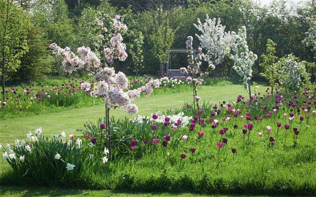 In pictures Alan Titchmarshs secret garden Gardens Spring bulbs