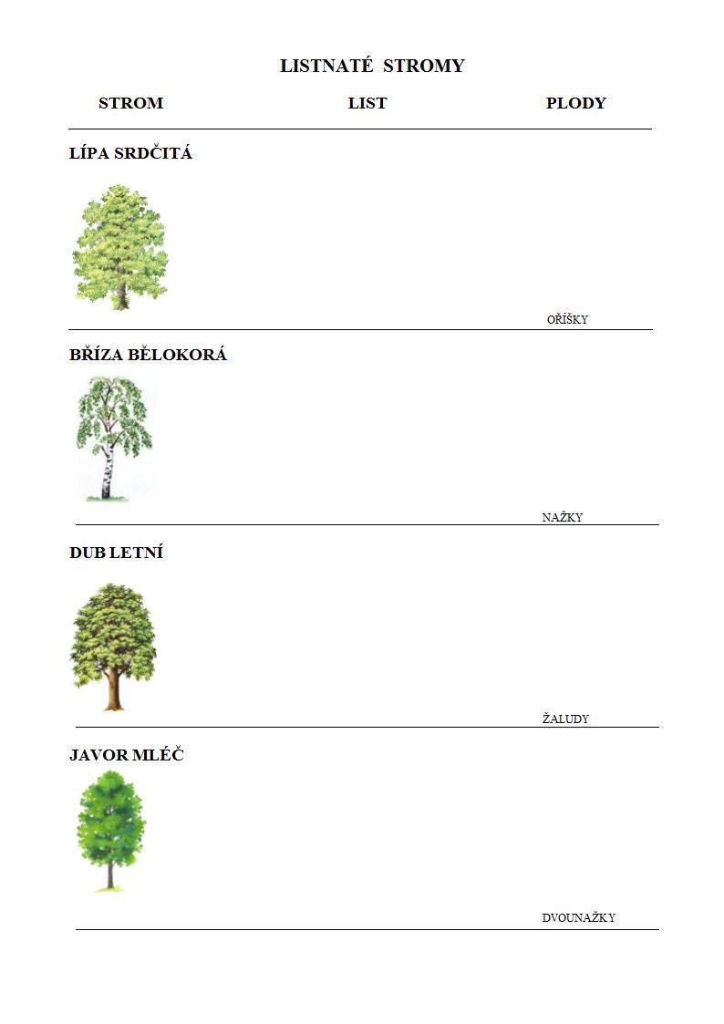 Listnate Stromy Pracovni List Pro Deti Doc Podzimni Knizka