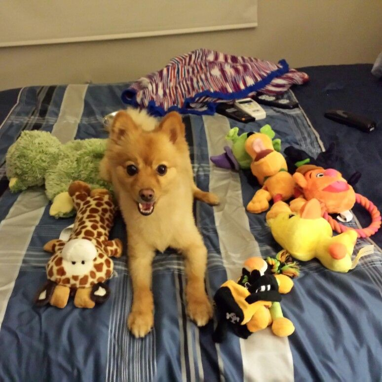 Sammy surrounded by his birthday presents!