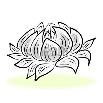 Dessin fleur dessin la main n nuphar lotus fleur lotus en 2019 n nuphar dessin dessin - Nenuphar dessin ...