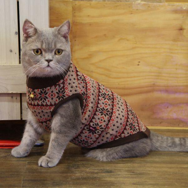 Sweater para gatit@ :)
