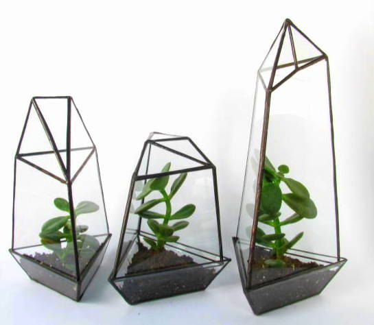 Living Succulent Planter / Set Of Three / Geometric Glass Terrarium /  Removable Tray (175.00