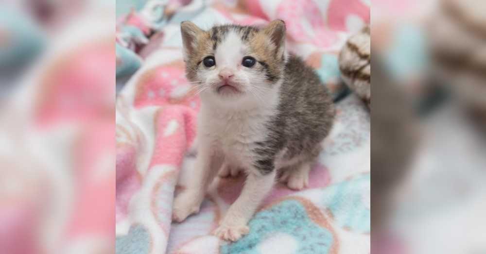 3 Week Old Kitten Saved By Teddy Bear Kitten Animal Rescue Stories Kitten Rescue