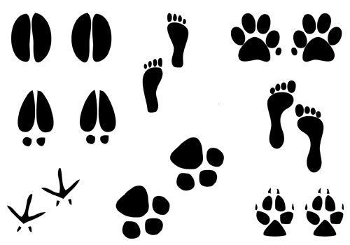 Foot Silhouette Vector Illustration Of Humans Dog Paw Cat Paw And
