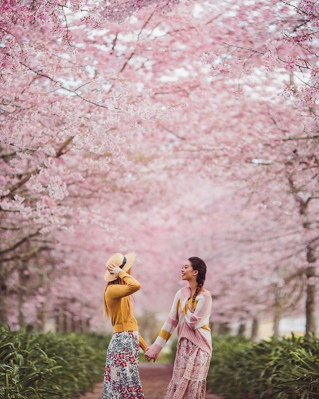 18 6k Likes 224 Comments Tara Milk Tea Taramilktea On Instagram Back At Our Favourite Tara Milk Tea Cherry Blossom Pictures Cherry Blossom Outfit