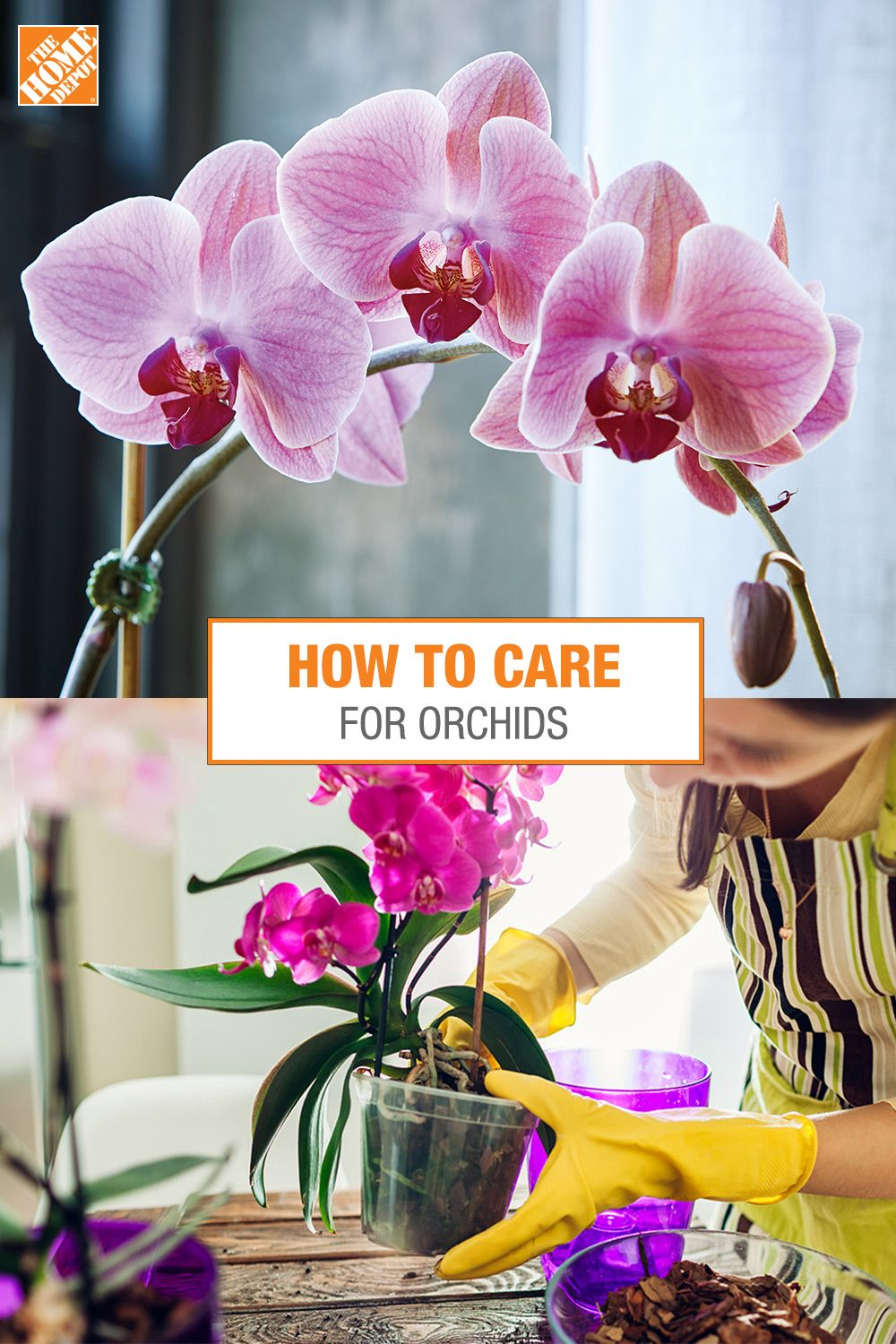 How to Care for Orchids in 2020 Orchid care, Orchids