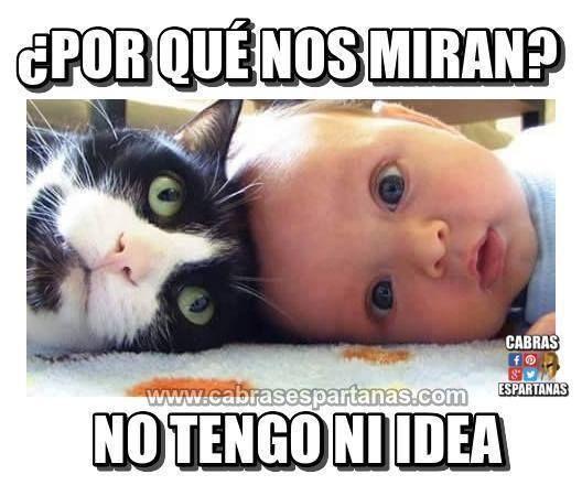 Bebes Y Gatos La Plaga De Facebook Gatos Chistes De Beber