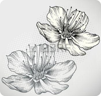 Gravure Fleur Abricots Fleurs La Main Dessin D