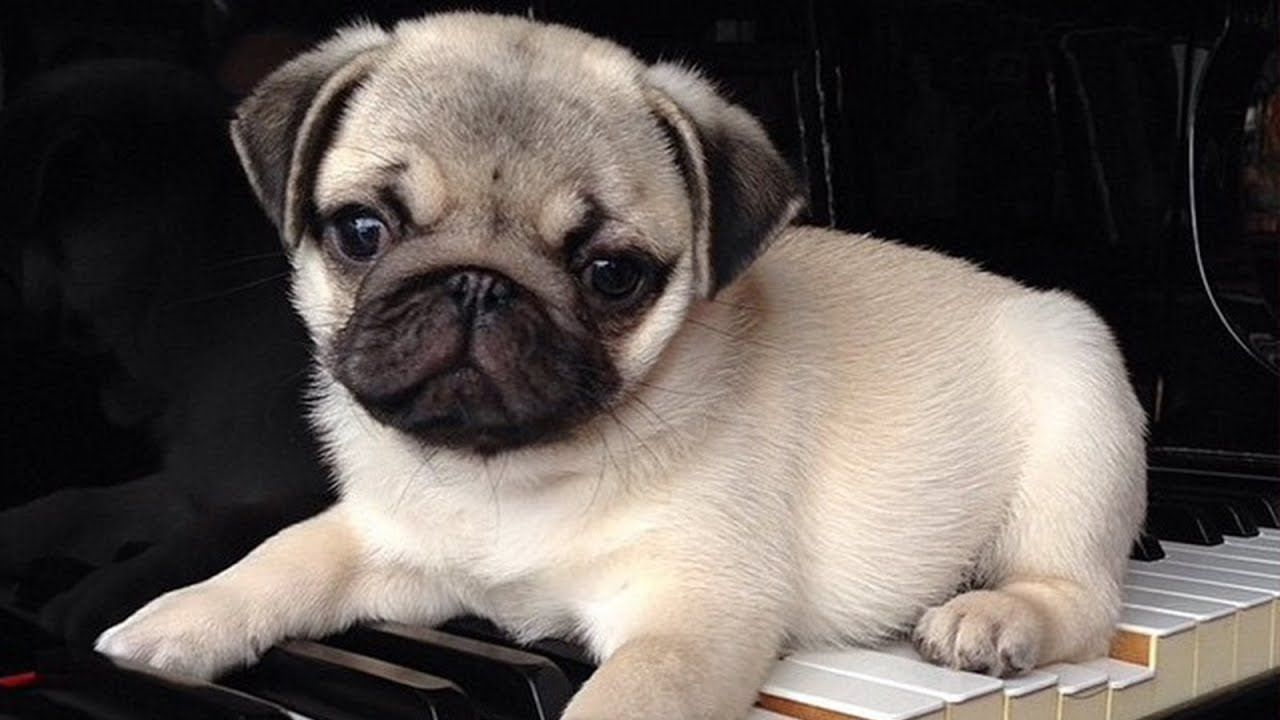 Cutest Puppies Breeds In The World World S Most Cutest Puppies