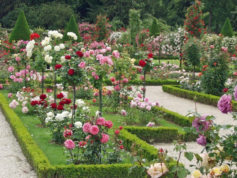 Kletterbogen Garten : Rosen garten rose pflanzen und gartenideen