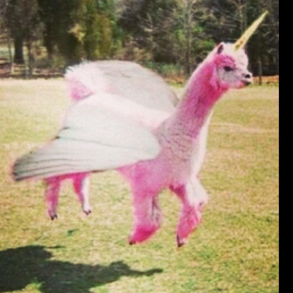 Bo macdonald on twitter llama spirit animal funny animals