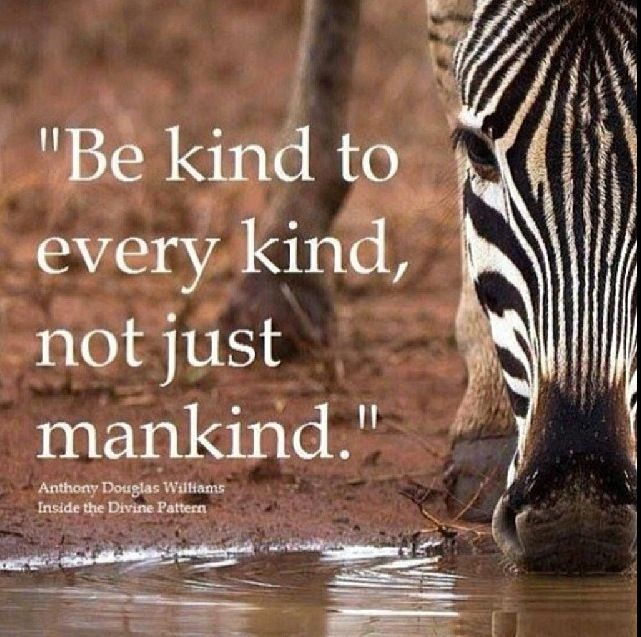 Protect Nature Quotes: Be Kind To All Quote. Animal Rights