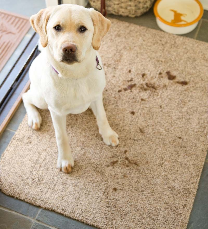 Can Dogs Get Rug Burn On Their Paws
