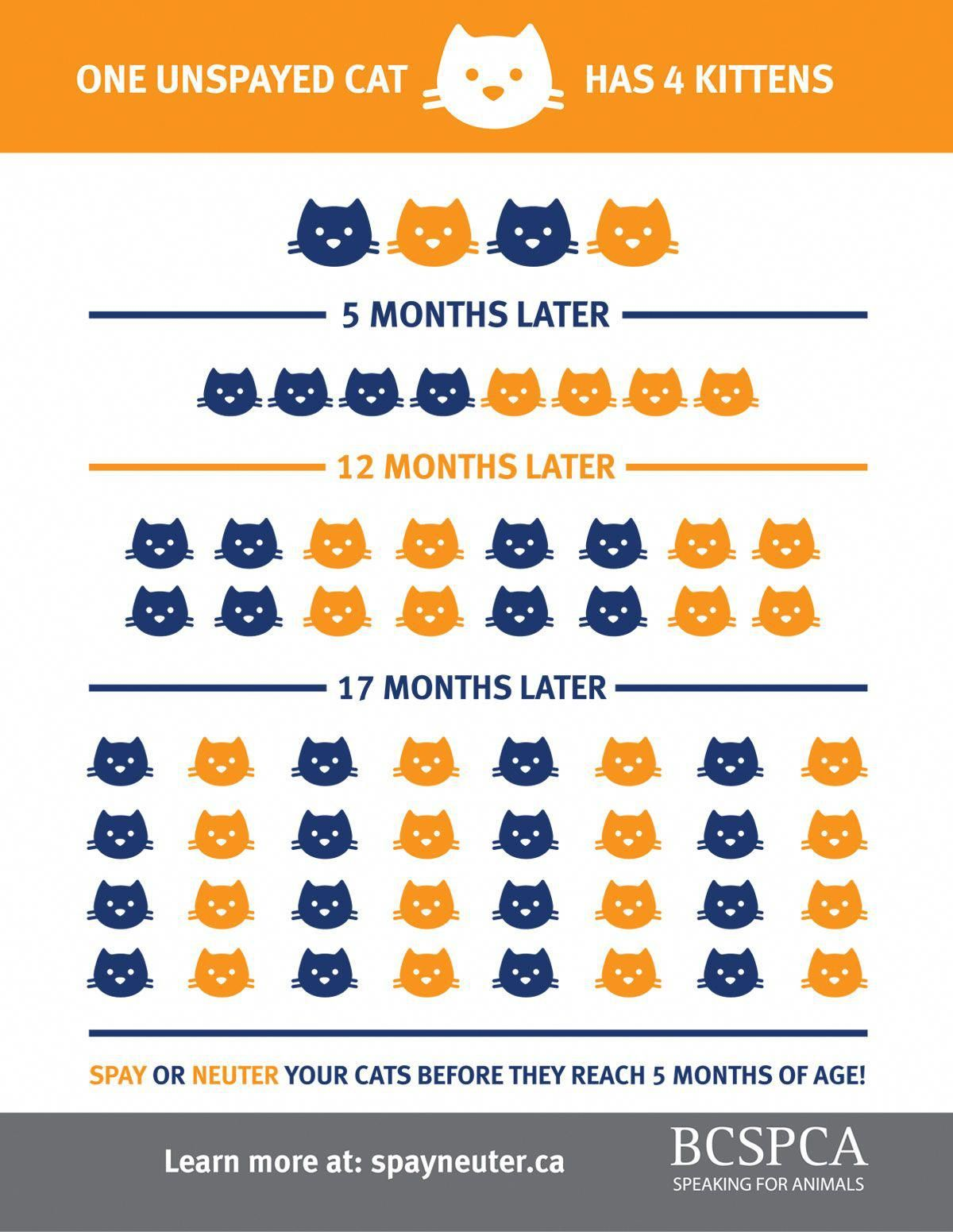 Did You Know Kittens Can Have Kittens Kittens Can Get Pregnant As Early As Six Months Old And A Female Cat And He Dog Food Online Cheap Dog Food Kitten Care