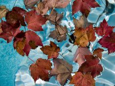 Red leaves Blue water stock photo