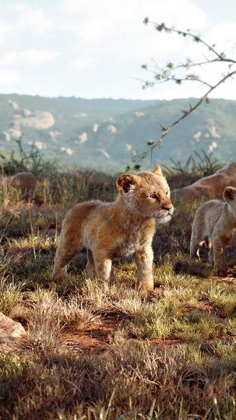 The Lion King 2019 Simba Nala Zazu 4k 3840x2160 Wallpaper Simba Rei Leao Rei Leao