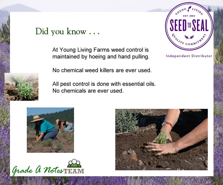 Seed To Seal - Weed Control Without Chemicals