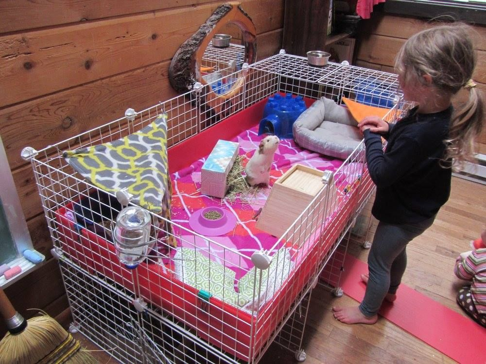 This little girl is doing a great job taking care of her guinea pigs! She has already taught her piggy how to sit up and beg (haha). Her mom, Alexis, reports that her daughter fills the lilac STAYbowl every morning without fail. Keep up the good work! Also really love this raised C&C cage set up! [Photo credit to Alexis Croce]