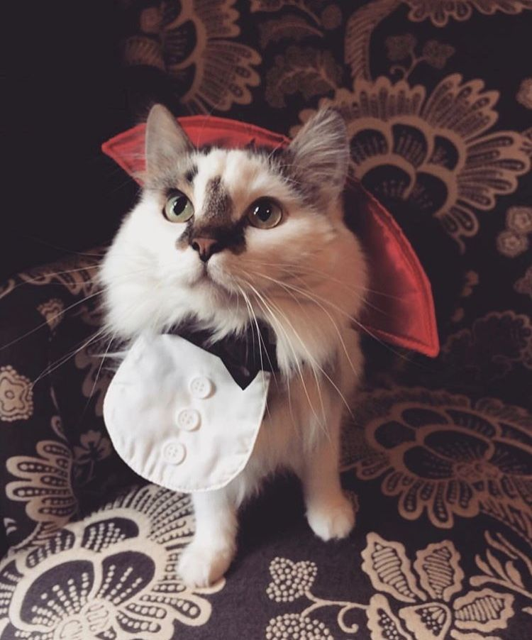 Pin By Emily Olson On Halloween Feline Animals Cats