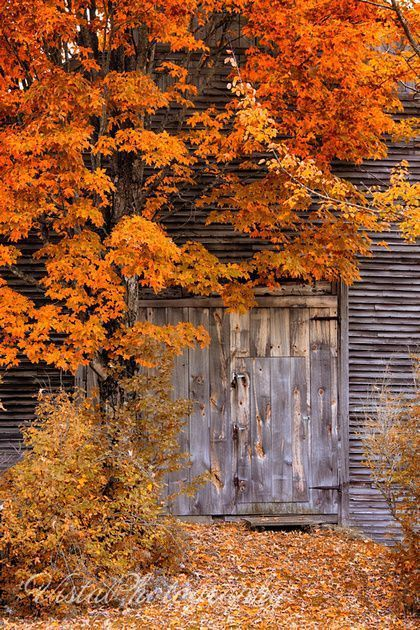 Autumn ~ Country ~