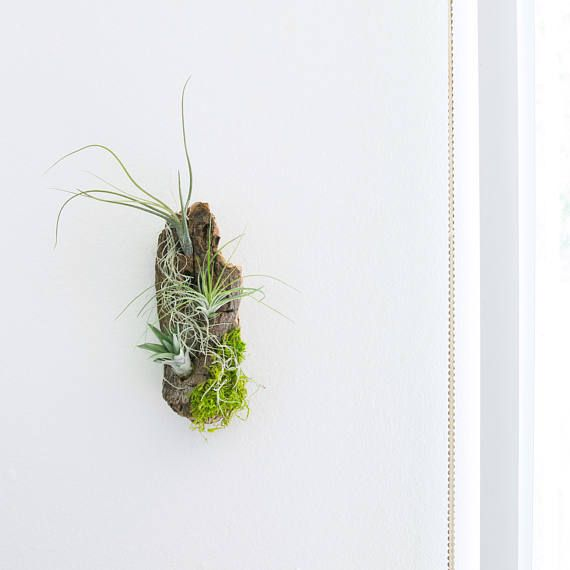 Take A Piece Of The Beach Home With This Unique Air Plant Driftwood Wall