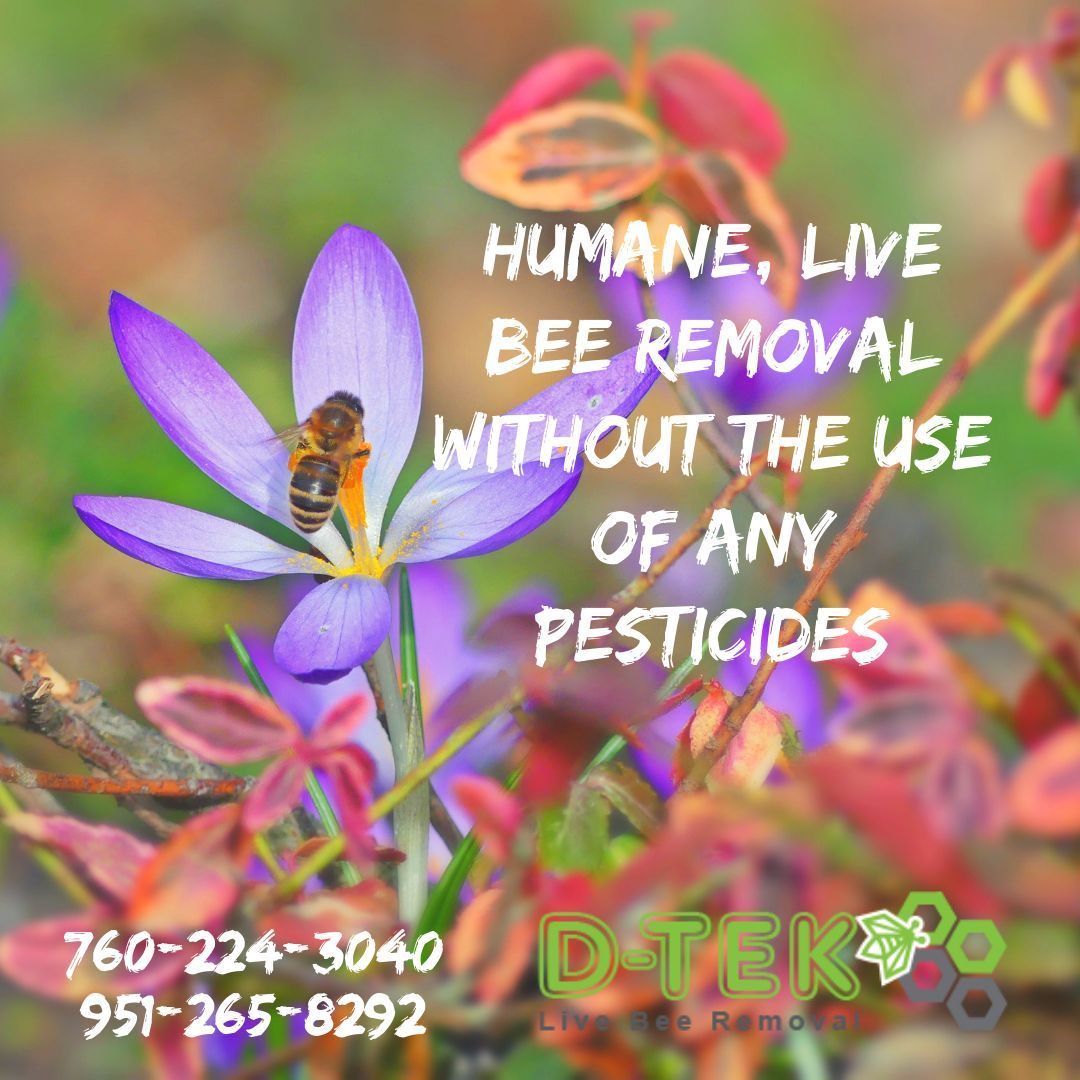 After every bee removal is complete, our professionals
