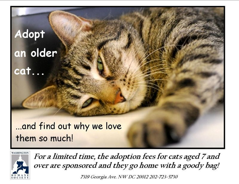 Our Cat Is 4 Now We Adopted Her At Age 2 Senior Pet Care Cats Senior Cat
