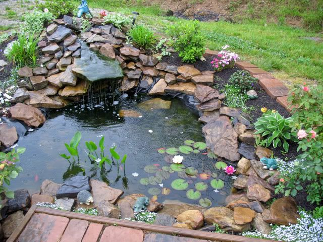 Patio fire pit goldfish pond completed pics for Outside goldfish ponds