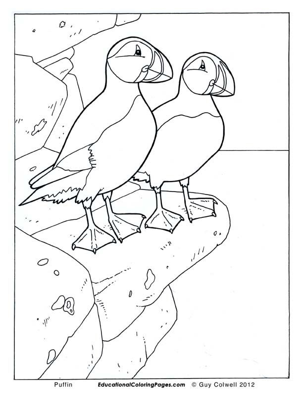 Birds Book One Educational Fun