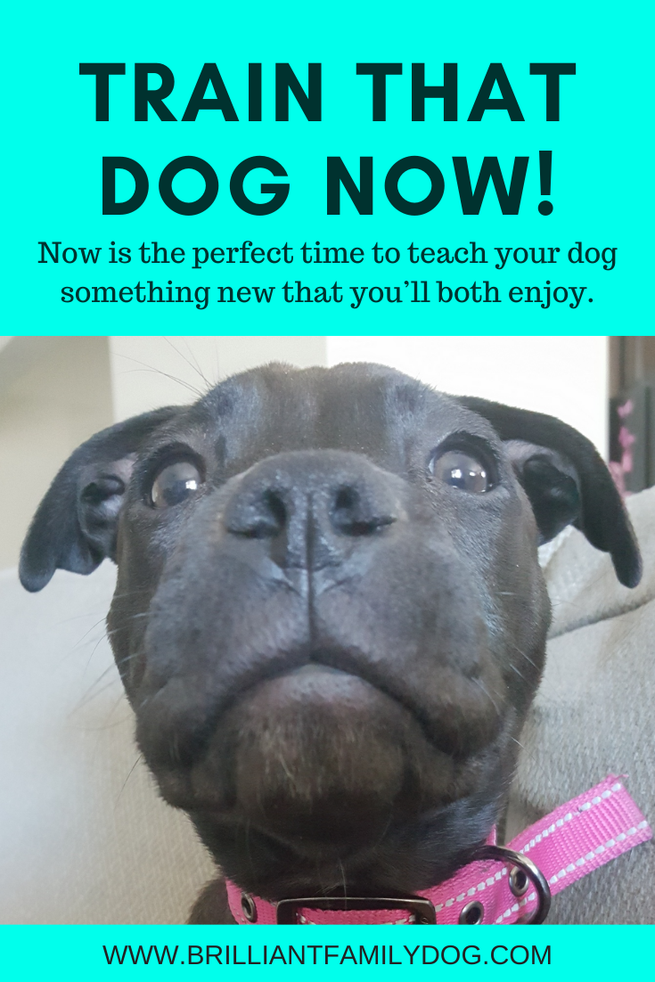 There S Never Been A Better Time To Train Your Dog Brilliant Family Dog In 2020 Training Your Dog Dog Training Books Dogs
