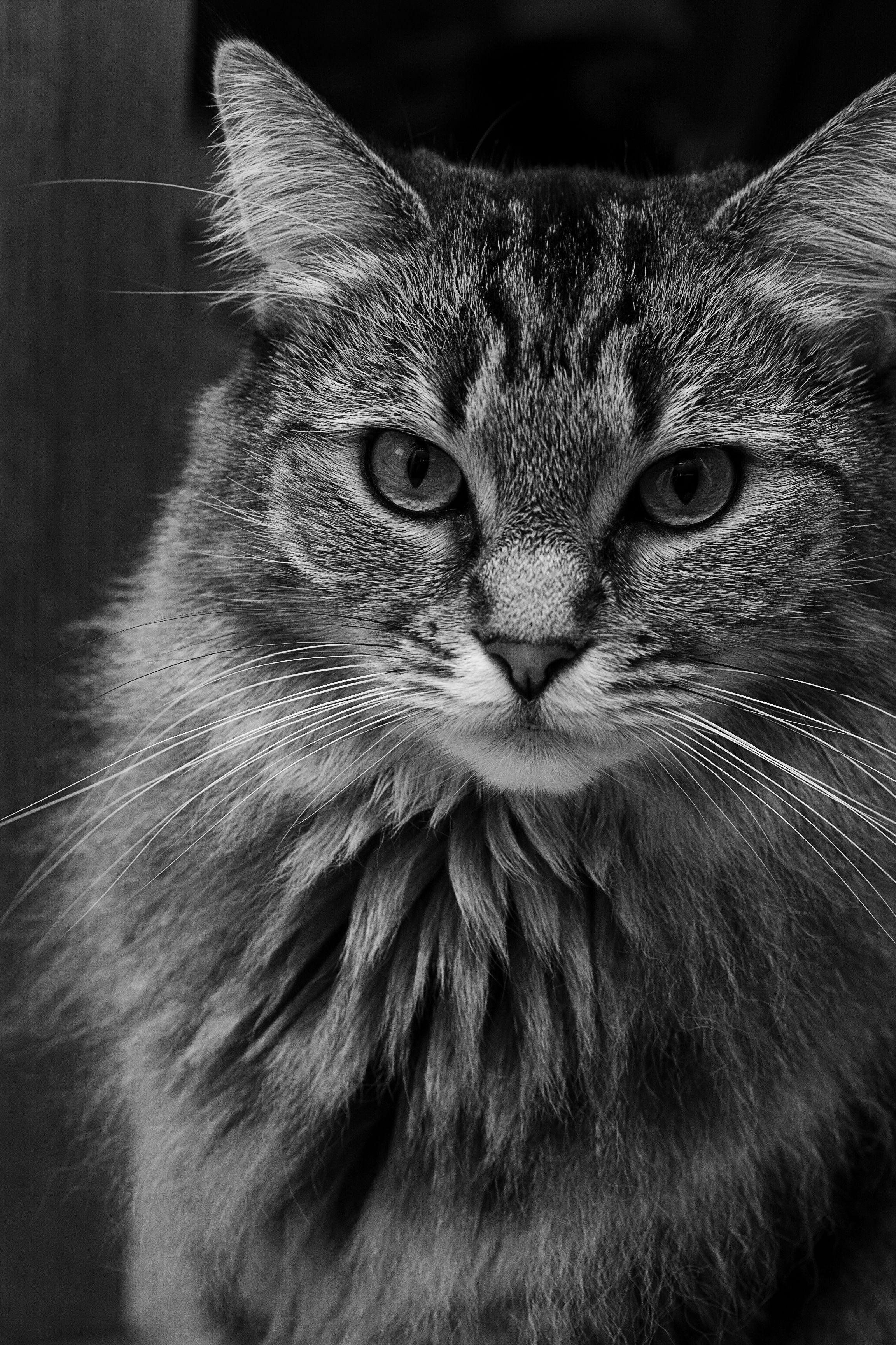 Badger Cat colors, Animals, Cat rescue