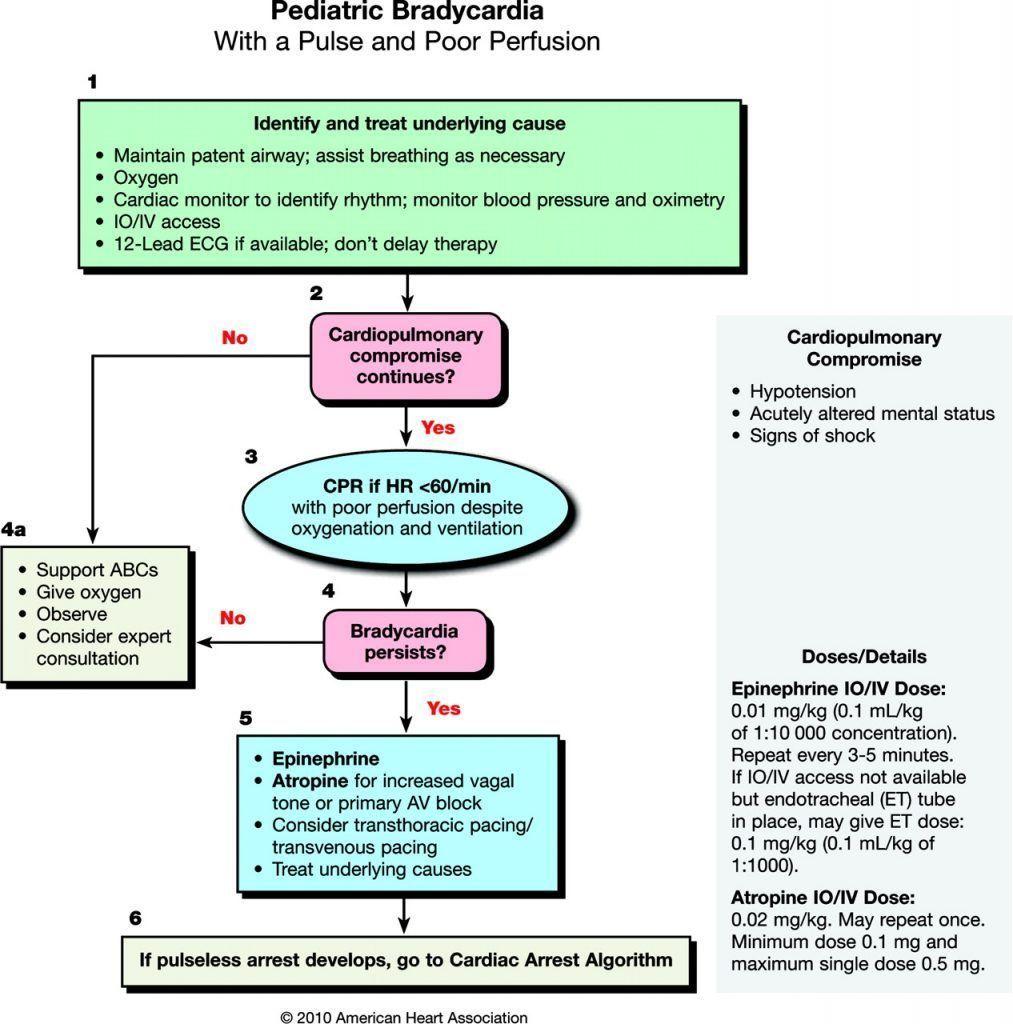 Pediatric Bradycardia Algorithm ACLS Pediatrics