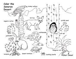 sonoran desert coloring pages - Google Search | Desert Unit in 2018 ...