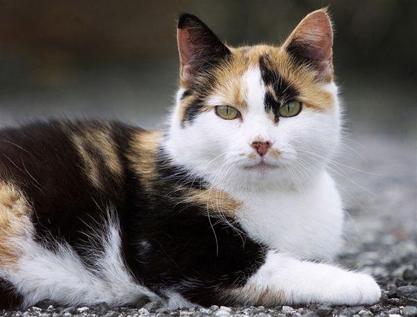 Pretty Gatos Animais Pt Br