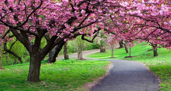 Top 10 Reasons To Admire And Honor Trees Blossom Trees Flowering Trees Spring Pictures