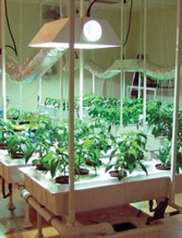 17 Best 1000 images about space greenhouse on Pinterest Gardens Veg