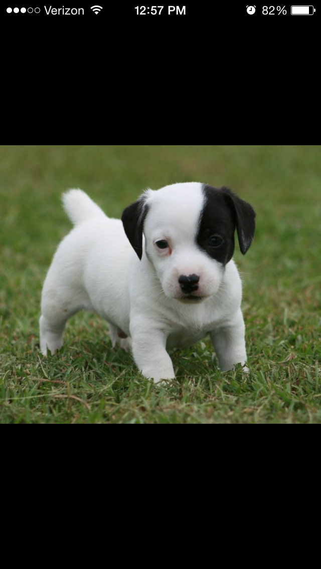 this is my baby Mighty Dawg when he was a few weeks old..he is now 4 ..Love Him !