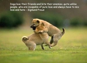 Quotes About Dogs And People Wallpapers Dogs Animals Funny