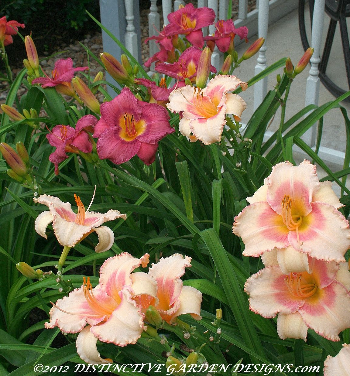 57 Amazing Beautiful Garden Ideas Inspiration And: Daylilies Hybridized By Jarvis, Texas