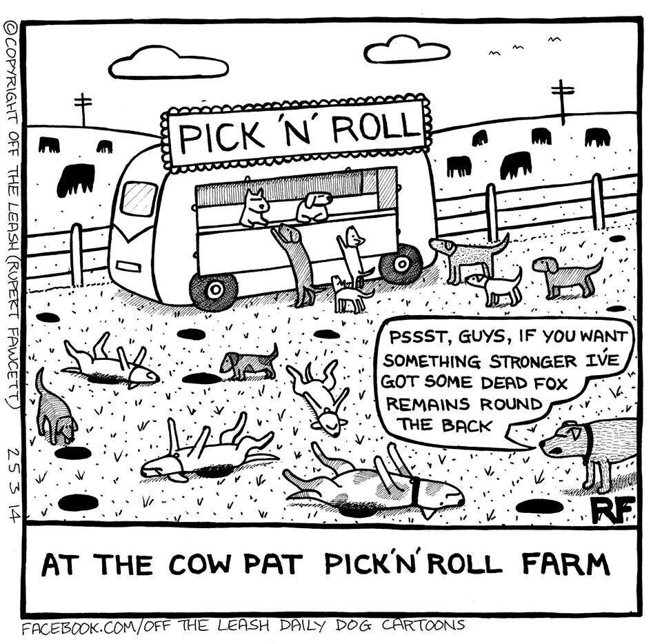 Jagger comió caca de borrego y luego la vomitó adentro de la camioneta.