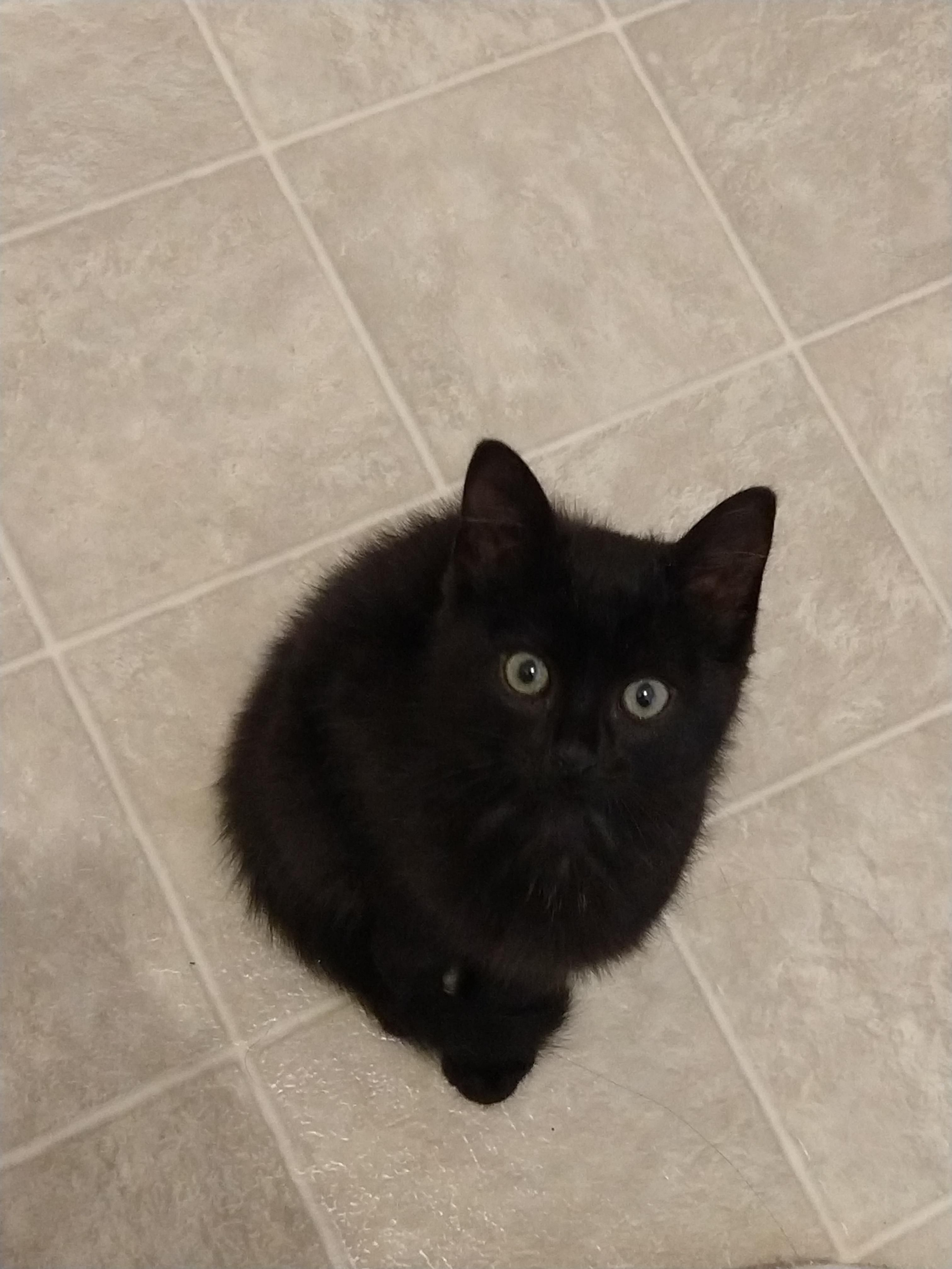 Oscar My 9 Week Old Furball Cute Cats And Kittens Cats Kittens