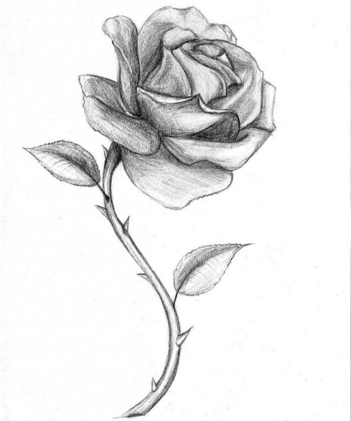 einfache bilder zum nachmalen, rosa mit dornen, schwarz