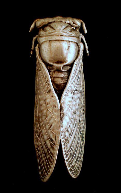 Cigarra de plata. Broche victoriano