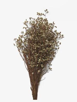 UFLF 12 Tipos de Flores Preservadas Secas Naturales Variadas Plantas Secas Flores para Regalos Fiesta Decoraci/ón Vela Resina DIY Manualidad Artesan/ía Bricolaje