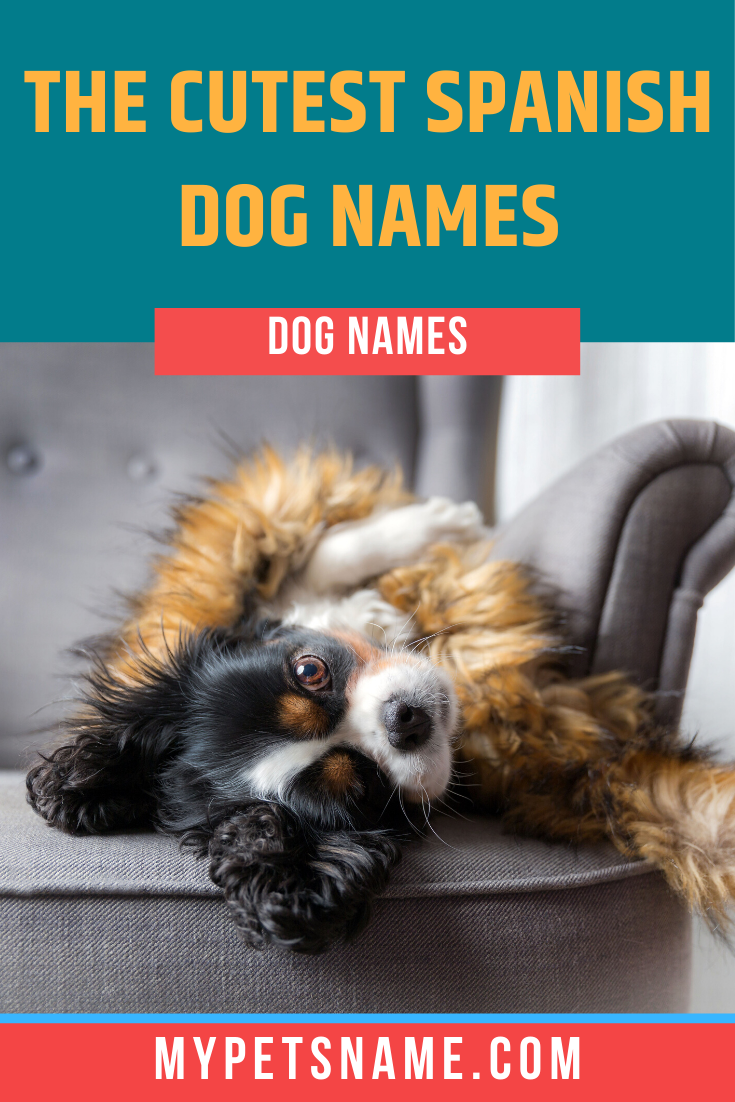Did You Know That Bonito Means Pretty In Spanish Wouldn T That Be A Great Name For Your New Dog Check Out Our List Of Cute Sp In 2020 Cute Pet Names