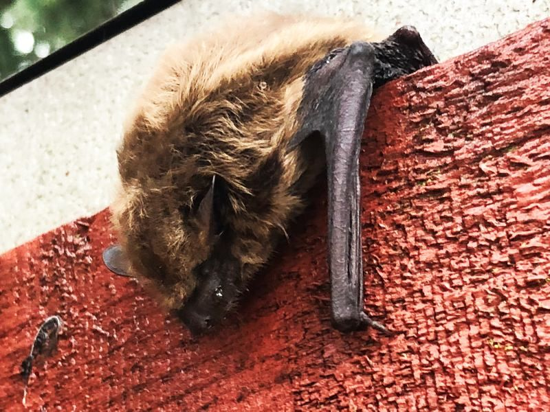 What Are The Top 10 Signs You Might Have A Bats In Your