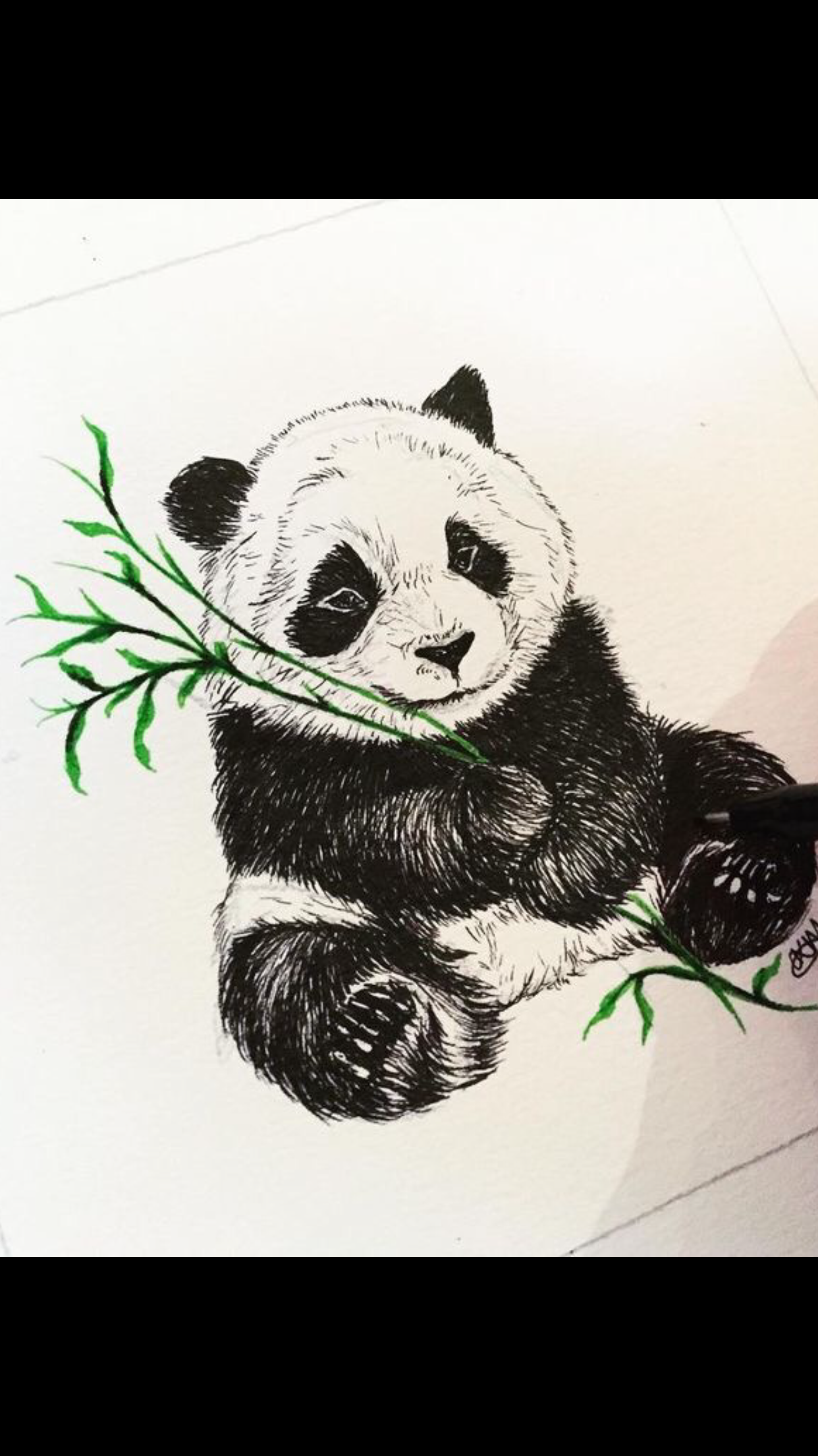 Panda Eating Bamboo Illustration